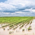 Continued rain threatens Ohio soybeans