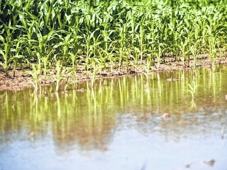 How record flooding likely will impact grain prices may be among questions posed to ag experts at the Farm Science Review.