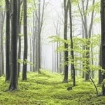 Farm Science Review topic: Shale's impact on forests