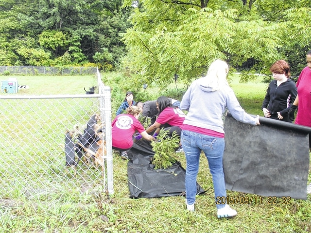 The Wright-Patt volunteers did a variety of projects at the sanctuary, including installing weed mat, mulching and planting shrubs, painting fencing and prepping an area for expanded space for animals.