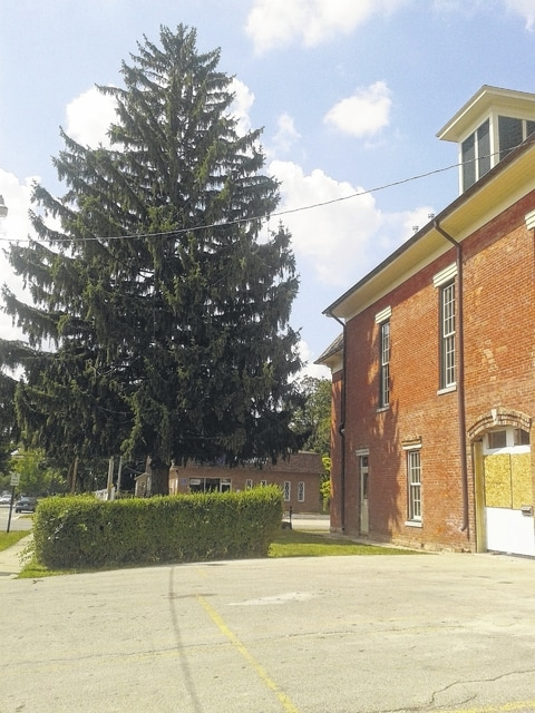 A proposal to provide new sidewalks for Town Hall, to comply with ADA requirements, includes the downing of a tall evergreen on the property.