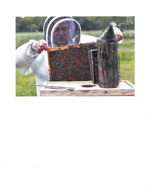 Dwight Wells, a sustainable beekeeper with the Propolis Project, LLC, inspects a young bee colony at Huffman Prairie's Queen Yard at Wright-Patterson Air Force Base.
