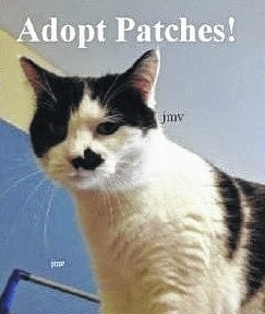 Patches is an adorable cat. She is a friendly girl who has a wonderful disposition and loves people. This beautiful cat is super affectionate and likes to be in your lap or scratched under her chin. Her black and white markings are striking. Patches likes to sleep under her pillow bed, which is so cute! She likes to play with toys and other cats. Patches is very sweet and it will only take a moment upon meeting her to fall in love. She would like to find her happy forever home with you. Patches is up to date on her shots and spayed. She has been wormed and she tested negative for feline leukemia. Patches is litter box trained and would be the purr-fect pet. Come visit her at Paws Animal Shelter, 1535 W. U.S. Route 36, Urbana. You can also check us out on Facebook at www.facebook.com/paws.urbana. Our hours are noon to 5 p.m. Tuesday through Friday; noon to 4 p.m. Saturday; closed Sunday and Monday. Phone 937-653-6233.