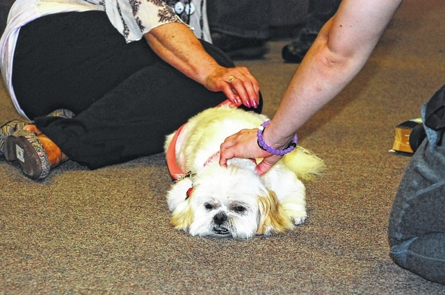 Princess, an 8-year-old female Lhasa apso, relaxes while being petted by a UU student.