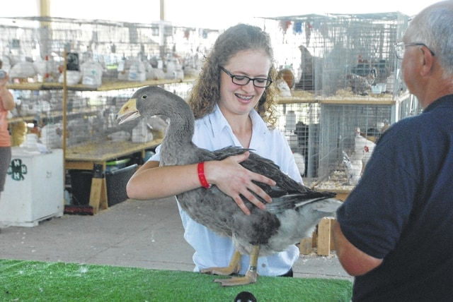 Elizabeth Hysell competes in the Jr. Fair Poultry Showmanship competition at the Madison County Fair July 11.