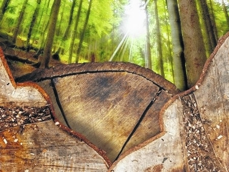 Low-impact logging goals include less erosion and compaction of the soil, less damage to surrounding trees and land, and a smooth start toward healthy regeneration of the forest.
