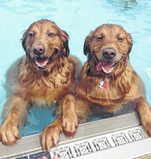 Boomer and Archie Hildreth enjoy last year's Swimfest. They were accompanied to the event by their person, Beth Hildreth.