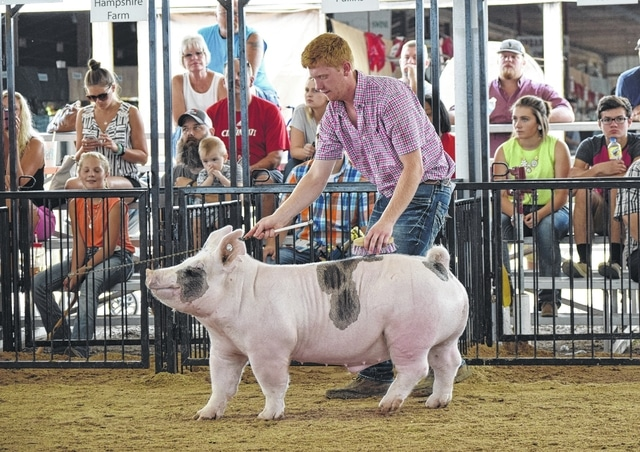 Jack Wing, a 2015 Mechanicsburg High School graduate, is pictured in the Swine Show Arena at the Champaign County Fairgrounds moments before his 262-pound crossbred hog was named Grand Champion Overall Market Barrow during the fair on Tuesday.