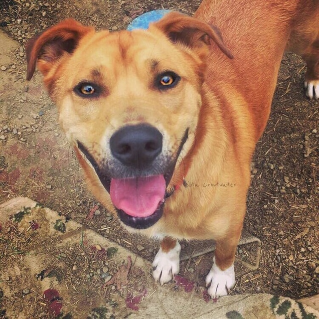 Levi is waiting for his person (or family) at PAWS Animal Shelter