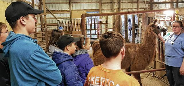 At a meeting of the Los Llameros de St. Paris 4H Club, Dr. Kari McManus of Urbana Veterinary Clinic discussed interesting facts about llamas, such as gut sounds, lung sounds and heart sounds. Each member listened to the sounds. The veterinarian treated one llama for a tooth root abscess. Shown with McManus are Jeremiah Chipps, Johnathan Reed, Kyle Boyd, Gabriel Lusk, Leah Lusk, Kalila Lightle and Honey the llama.