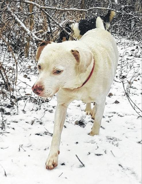 Sawyer may take a bit of time to warm up and trust people, but this 3-year-old is doing better all the time, according to his friends at PAWS Animal Shelter.