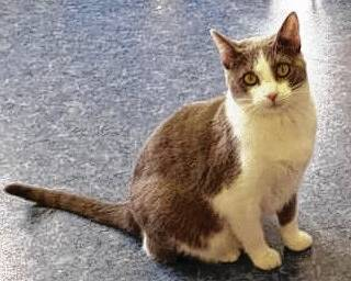 Patsy enjoys exploring and snuggling. She likes cats and people and is waiting for the perfect person to walk through the doors of PAWS Animal Shelter.