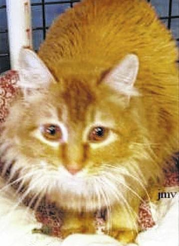 Mango is sweet, playful, cuddly and waiting for you at PAWS Animal Shelter.