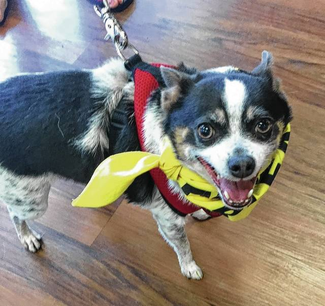 All of Spot's 10 years were with one human companion. That companion recently died, and now Spot waits at PAWS Animal Shelter for his second special someone to take him home.