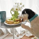 Careful: Some people foods not good for dogs