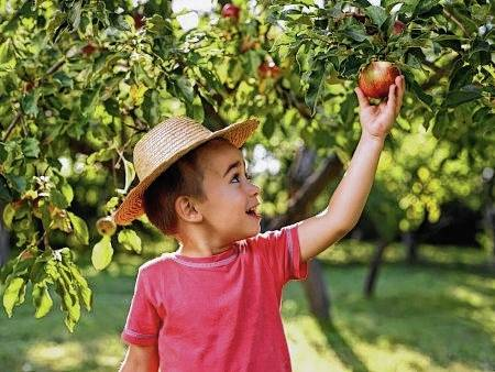 Take advantage of all the healthy fruits and veggies available in the fall. The list includes the yummy apple.