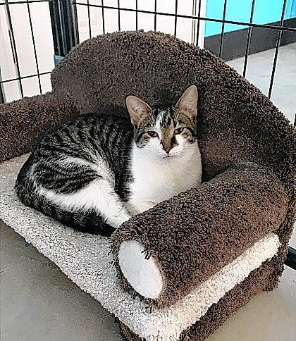 A purr-fect combination of playful and laid back, 6-month-old Allen is ready for adoption at the Champaign County Animal Welfare League.