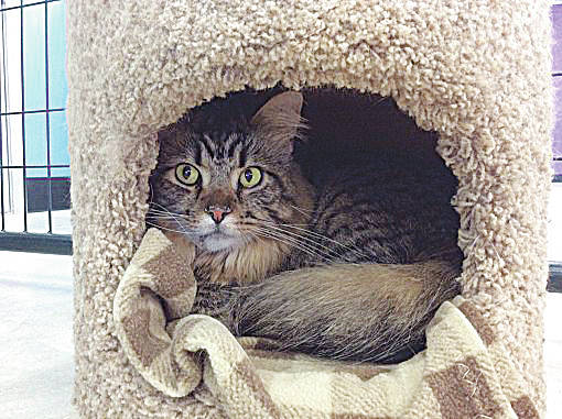 Tony is a laid-back kitty who enjoys curling up in a cubby hole to take naps.