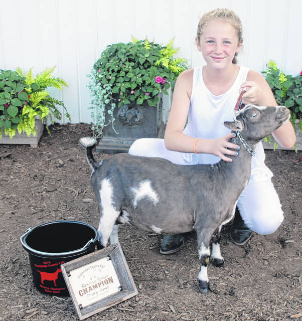 Asher Daniels, Reserve Sr. Champion, Reserve Ground Champion. According to Daniels, this is the first time in Champaign County fair history a Nigerian Dwarf goat has won class over standard-sized dairy goats.