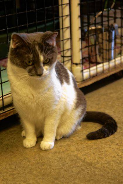 Sugar Bean is playful and friendly and up for adoption at PAWS Animal Shelter.