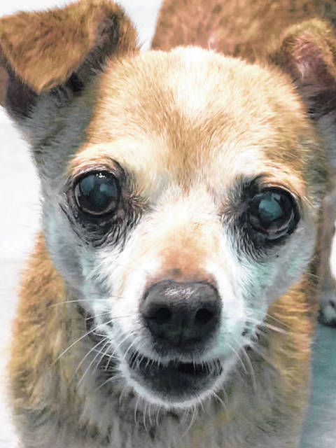 Loving and healthy at age 14, Rosie finds herself at the Champaign County Animal Welfare League, whose staff hopes a good person/family will welcome her into a new home.