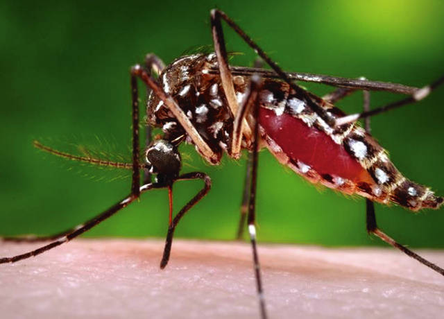 Ohio has a type of mosquito that can transmit West Nile Virus, and a local case was reported in Champaign County this week.