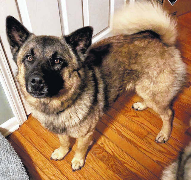 Pets Of The Week Urbana Daily Citizen